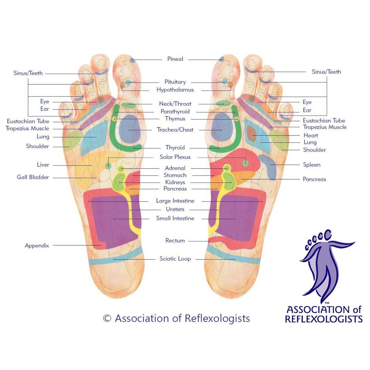 Reflexology Footmap by AOR